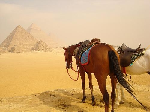 Horse Riding at Pyramids Area