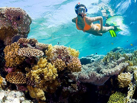 Snorkeling Trip & Excursion